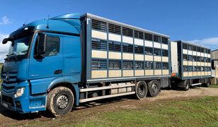 MERCEDES-BENZ Actros 2548 for pigs transport camión para transporte de ganado + remolque para transporte de ganado